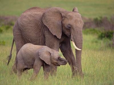 elefante_0